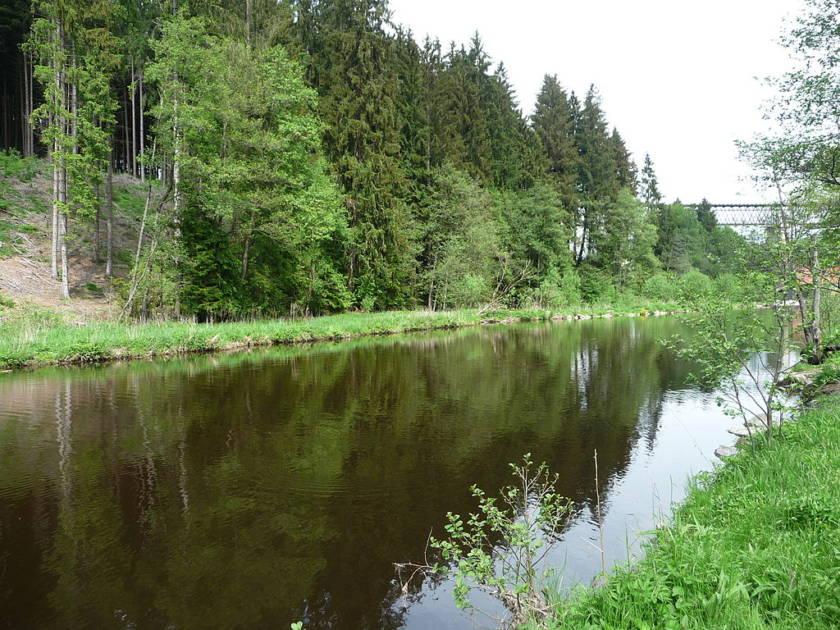 Schlossauer Ohe im Bayerischen Wald